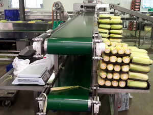 Horizontal Vegetable Sorting Conveyors
